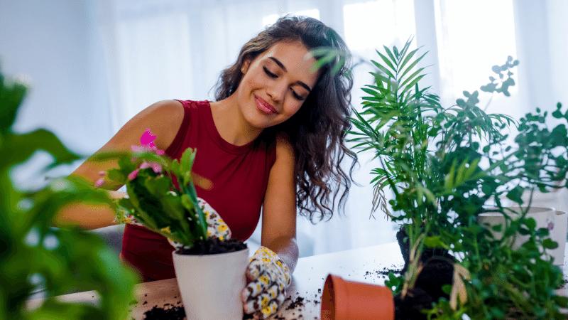 Plantas que ajudam em como refrescar o ambiente