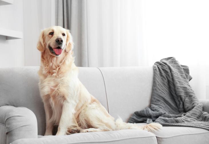 O sofá, na maioria das vezes, é o queridinho de quem está em casa. Mas afinal, como conservar o sofá limpo por mais tempo?